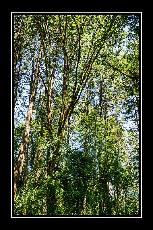 """""""Solstice - Dog Park Forest"""""""