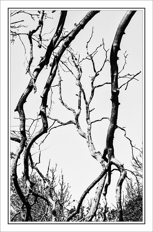 """""""Natural Frame of Wabi Tree""""  BW,BlueFilter"""