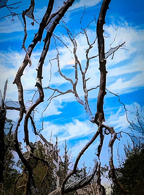 """""""Wabi Natural Frame;My Sky;Line&Ink"""""""