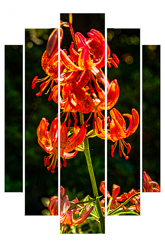 """Sebright Gardens Beauty""   Triptych"