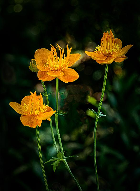 """""""Vertical Orange (Sebright Gardens)"""""""