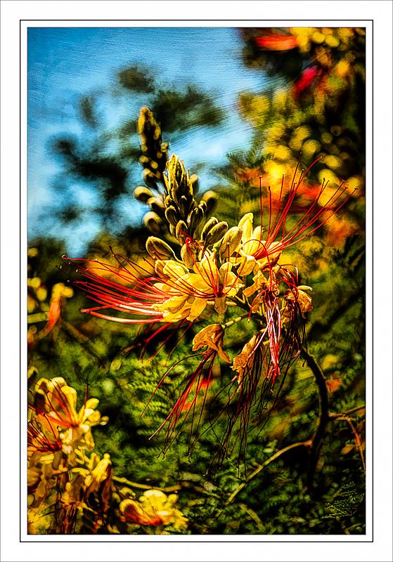 """Amazing Flower (Sebright Gardens)"""