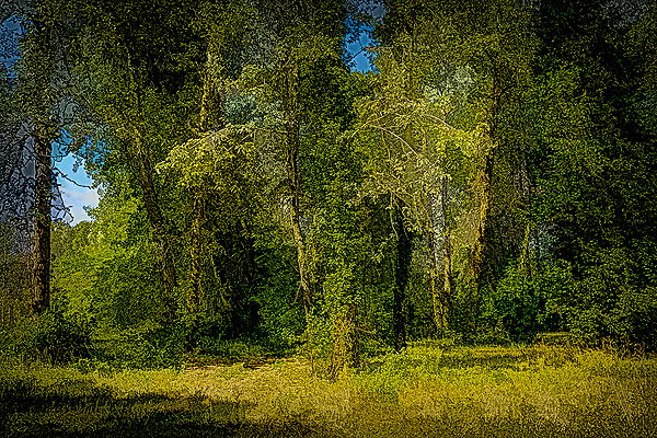 """""""Riverfront Park in Summer, Painterly"""""""