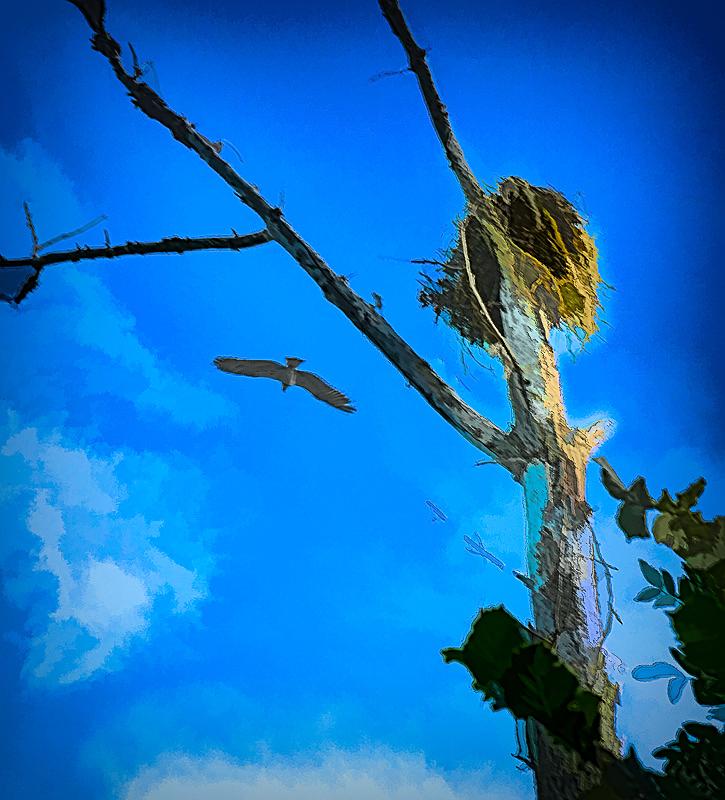 """""""Osprey Nest, Painterly"""""""
