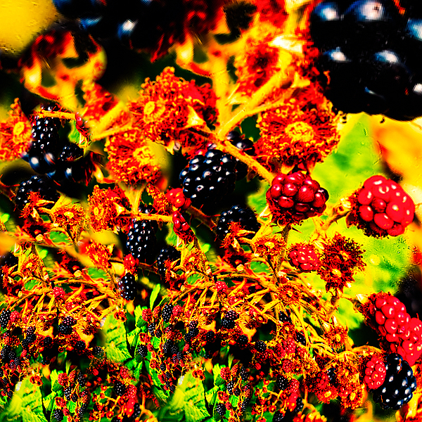 """""""Abstract of Blackberries Galore"""""""