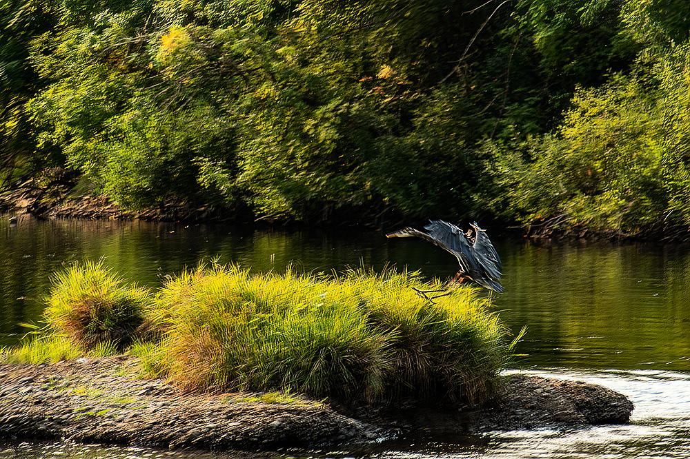 """""""Heron Landing #2"""""""