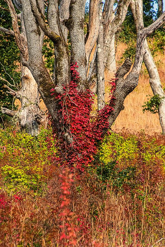 """""""Wabi Sabi Autumn"""""""