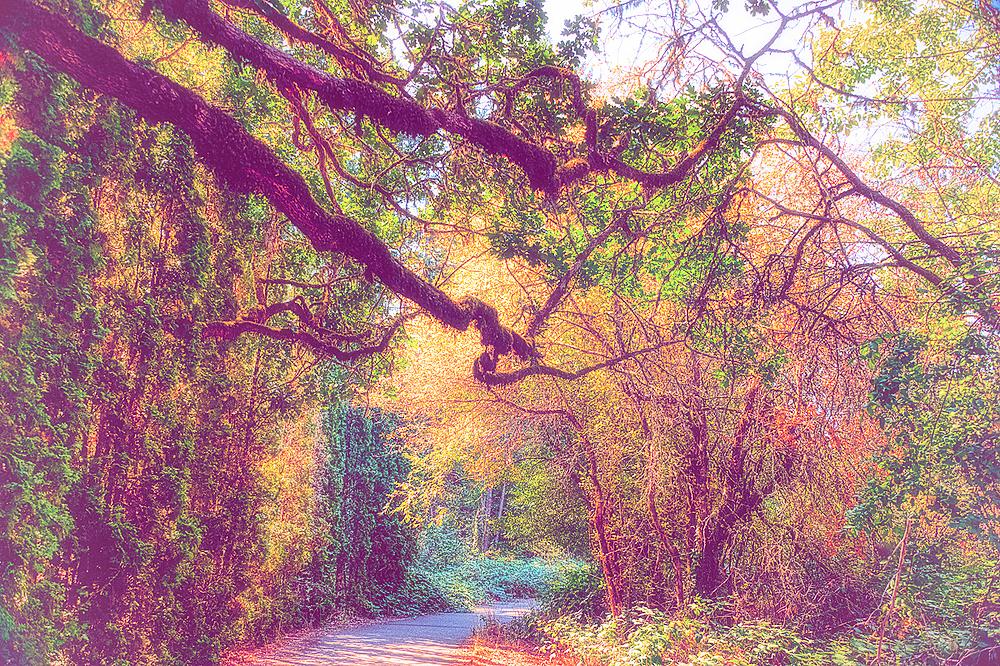 """""""Autumn on Circle Trail, Nostalgia"""""""