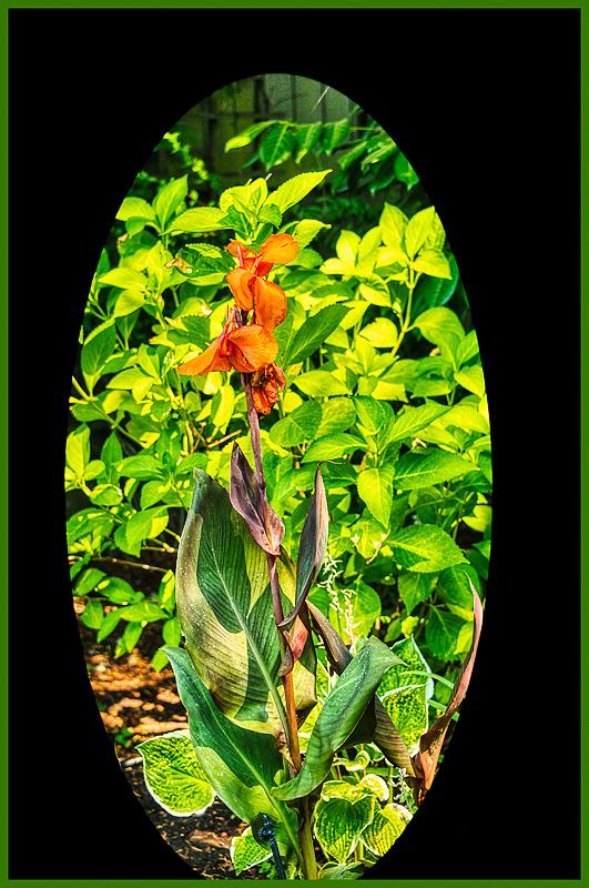 """Great Flower Leaves"""