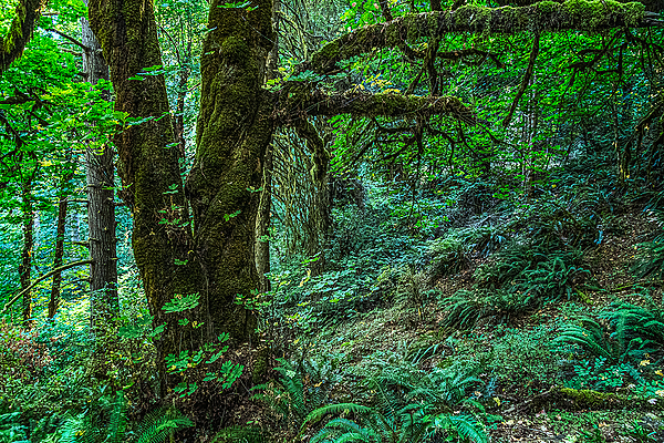 """""""Old Growth Greens"""""""