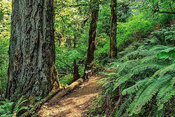 """Classic Trail"""