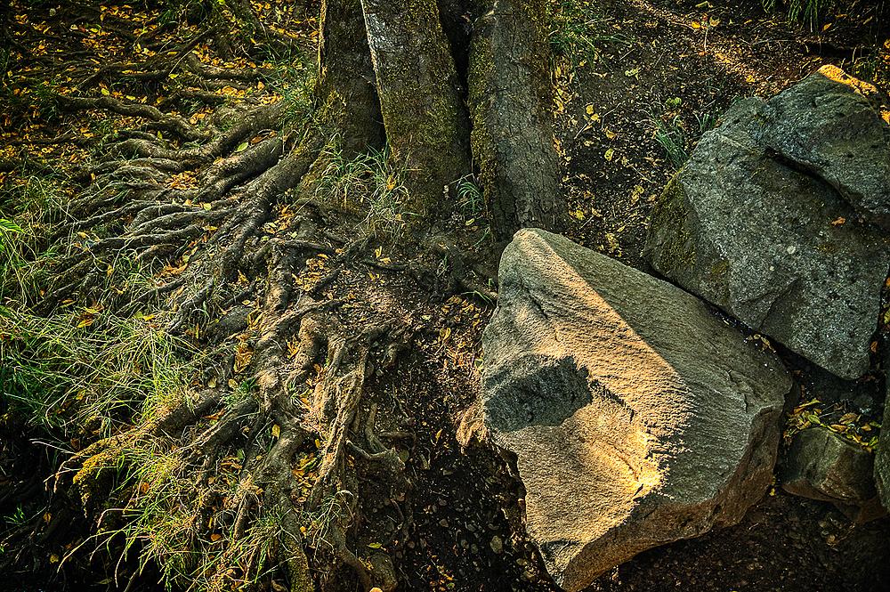 """""""Roots & Rocks Along Oak Creek"""""""