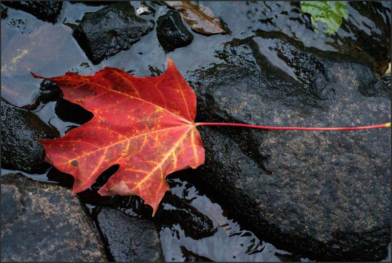 leaf in river