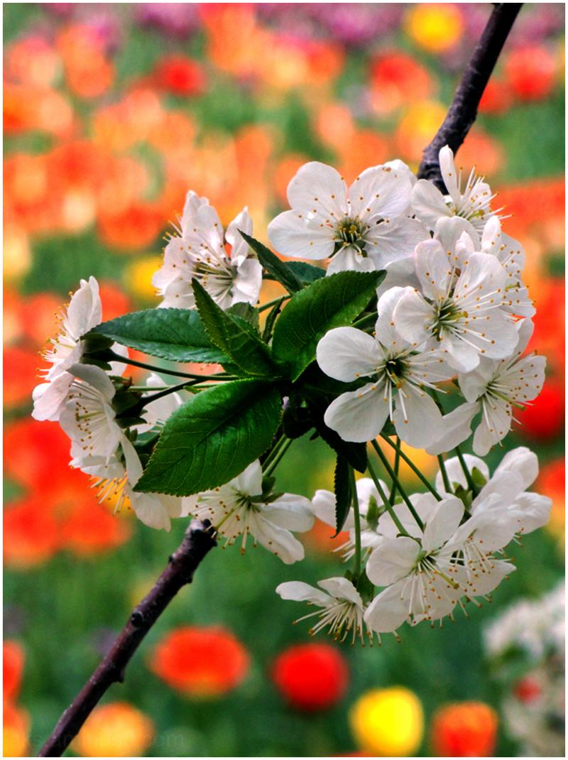 """Hello """"Spring"""