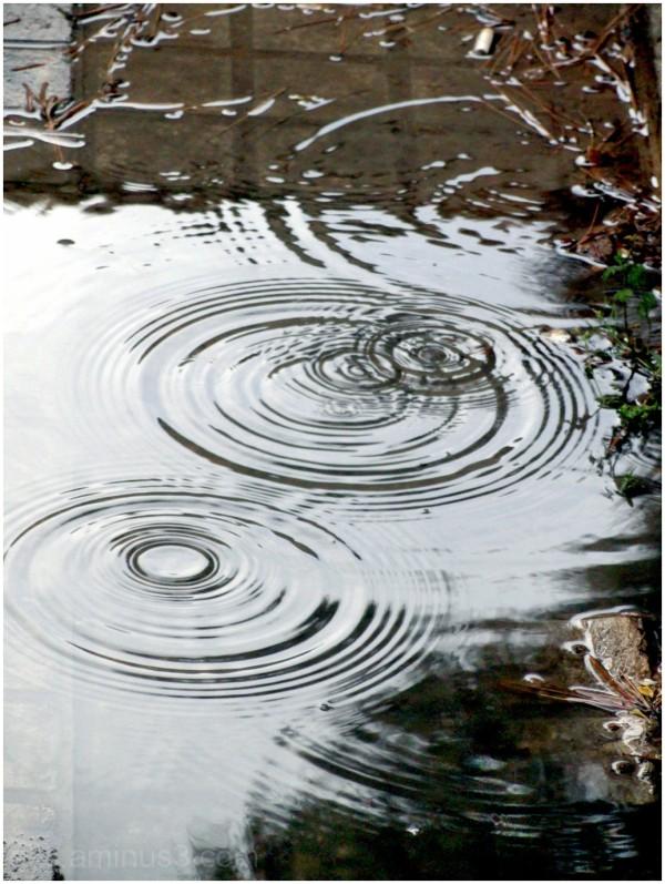 Rain & Waves