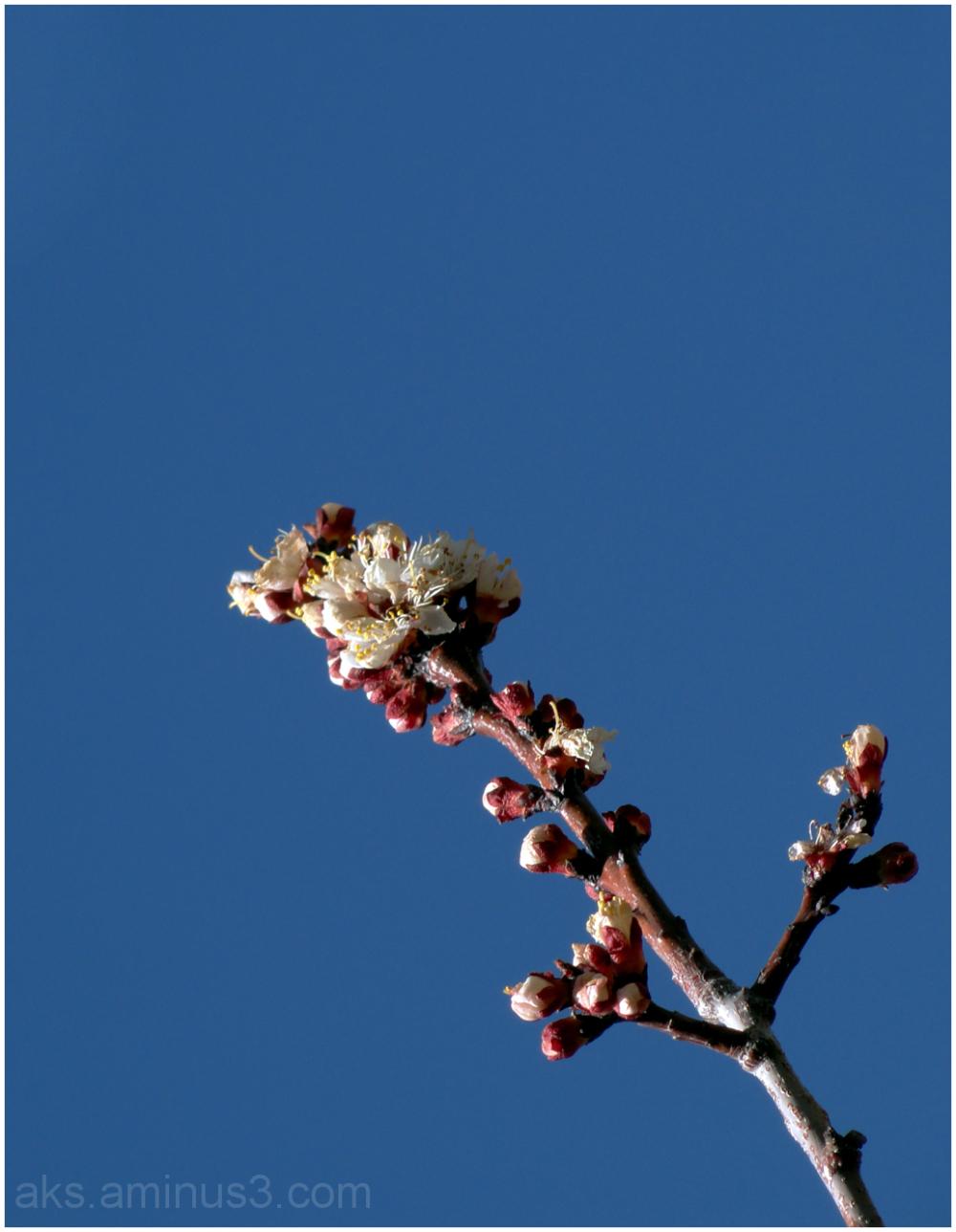 Springtime 3