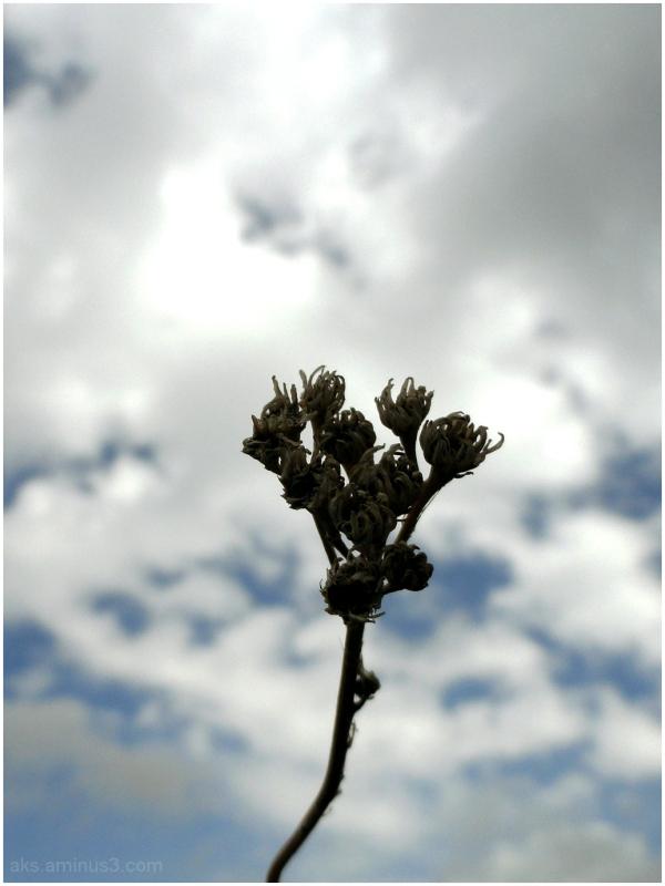 Claw on sky
