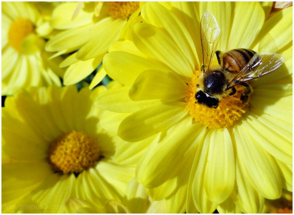 Explorer bee