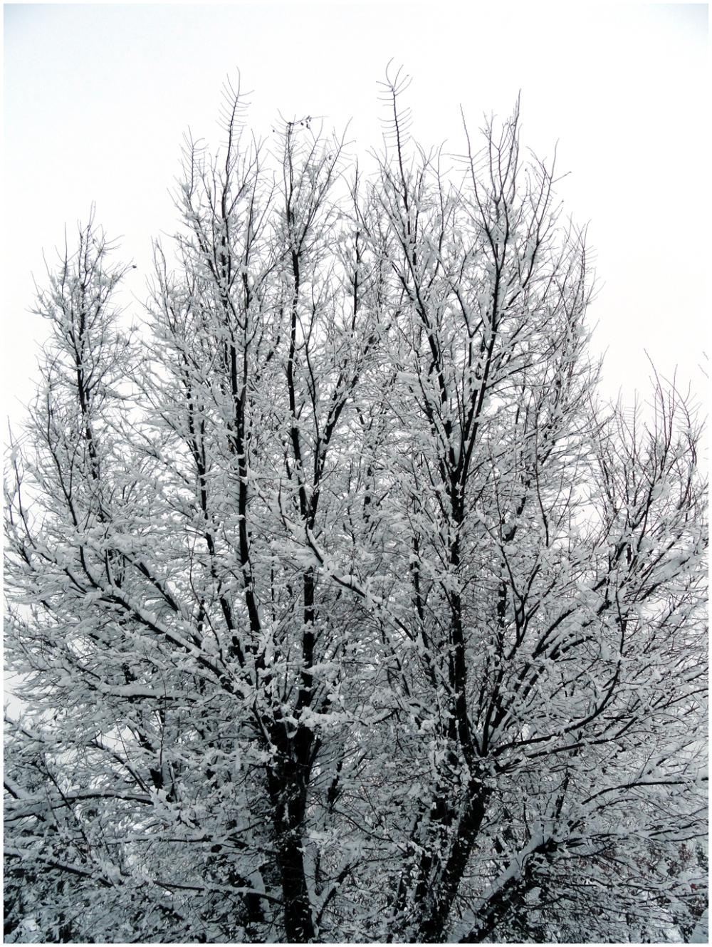A snowy day 5