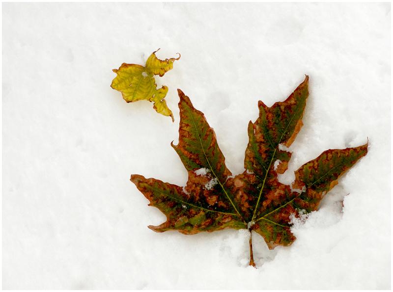 A snowy day 6