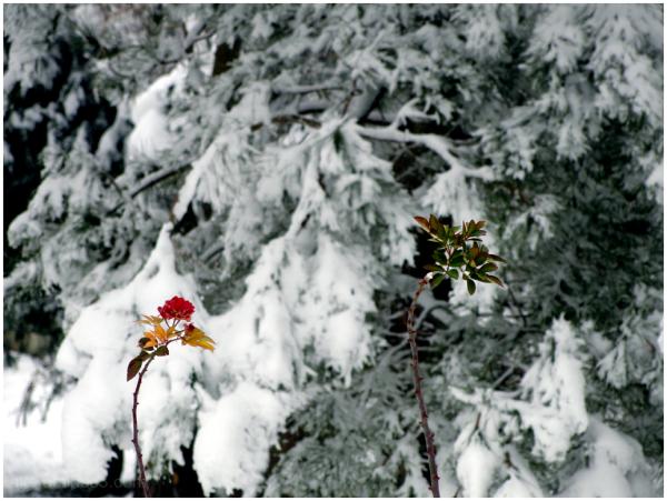 A snowy day 7