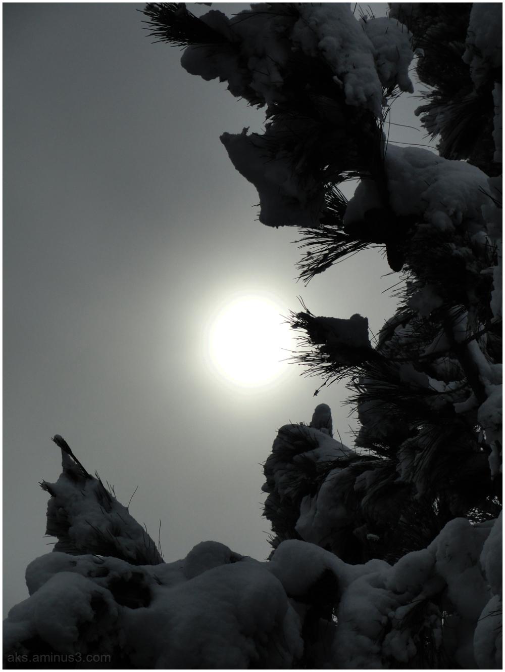 The sun behind the fog
