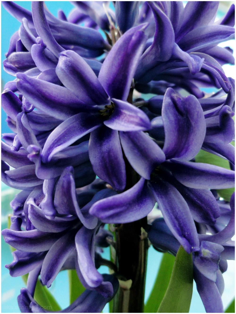 Vernal flowers