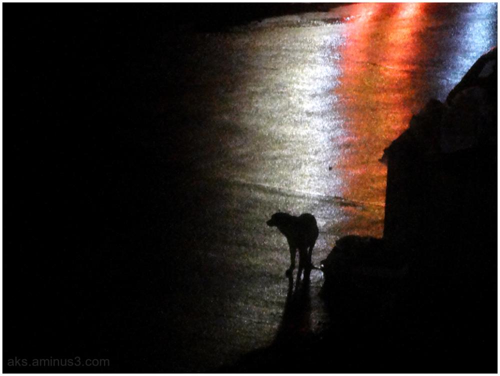A dog on a rainy night
