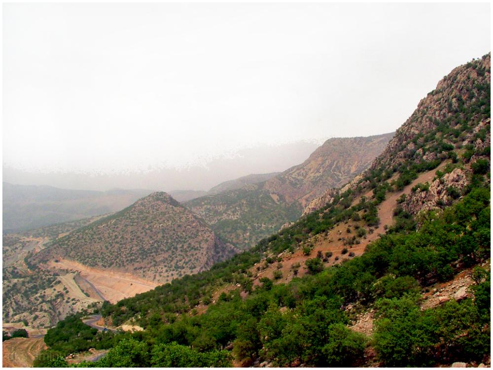 Mountainous forest
