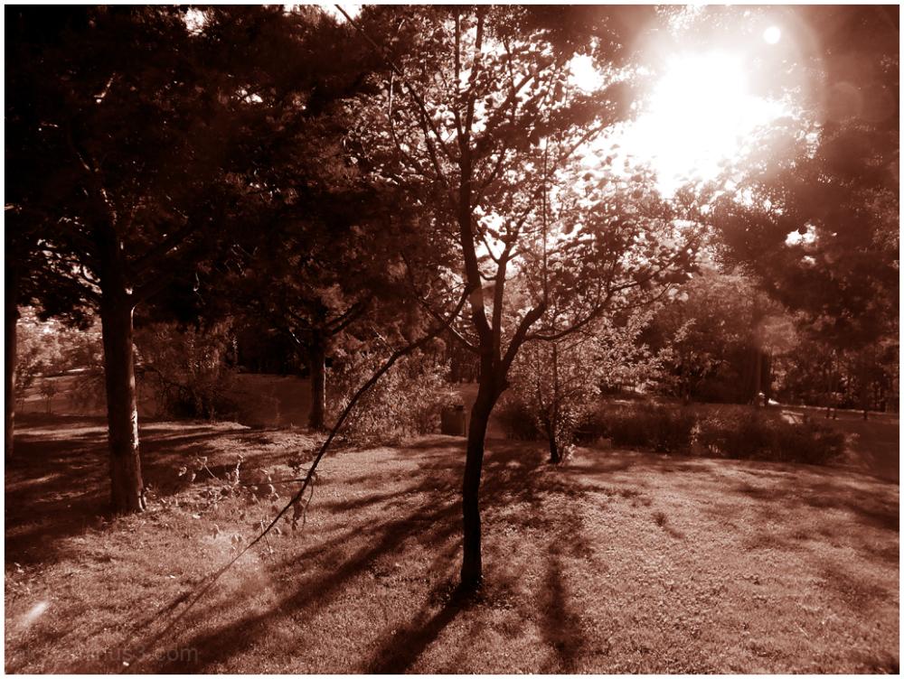 Old autumn