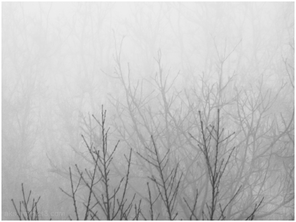 Branches in fog