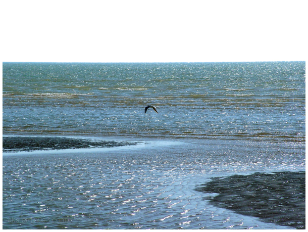 Sea and bird