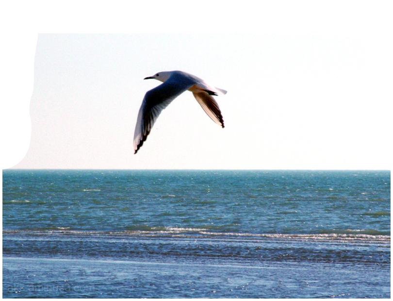 Sea and bird