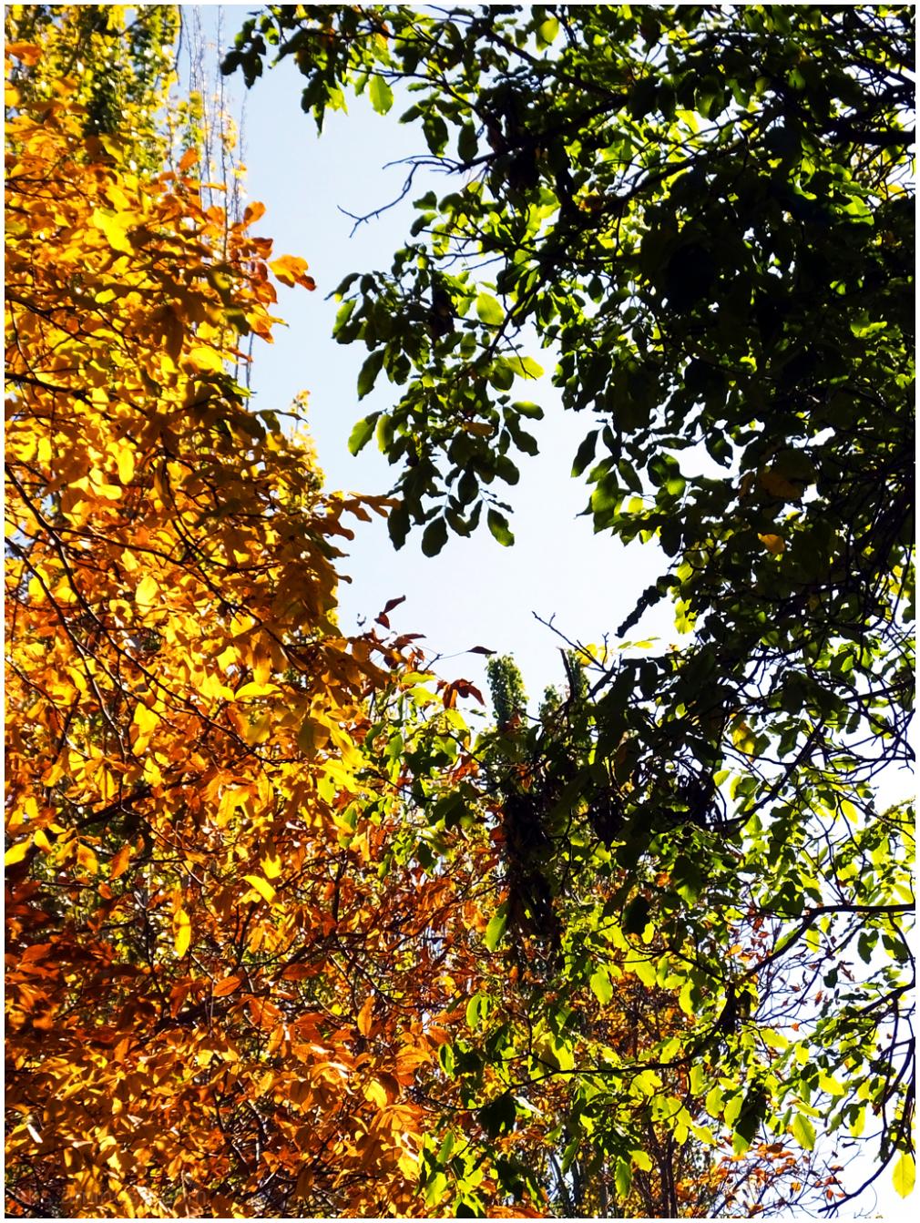 Mid fall