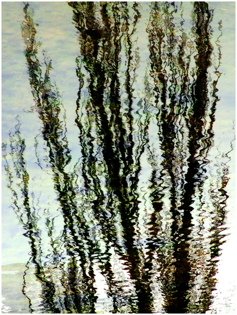 A tree in the water