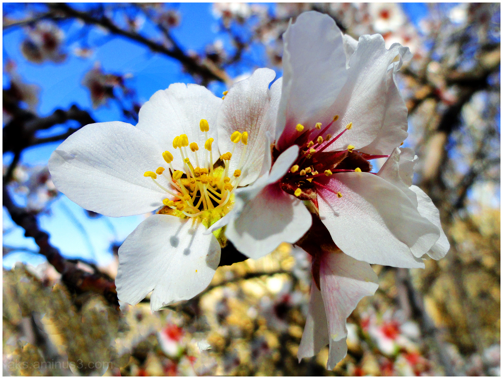 . . . Spring