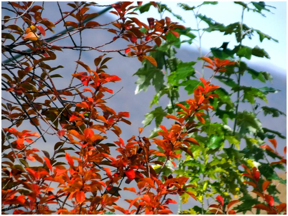 Colores season