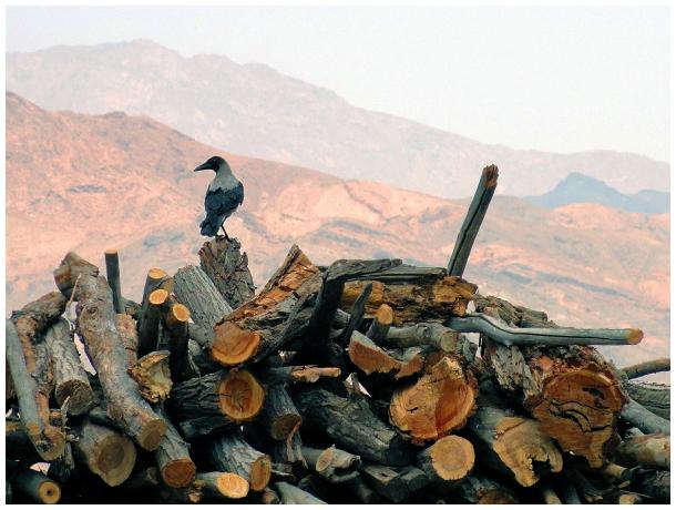 A crow on firewood