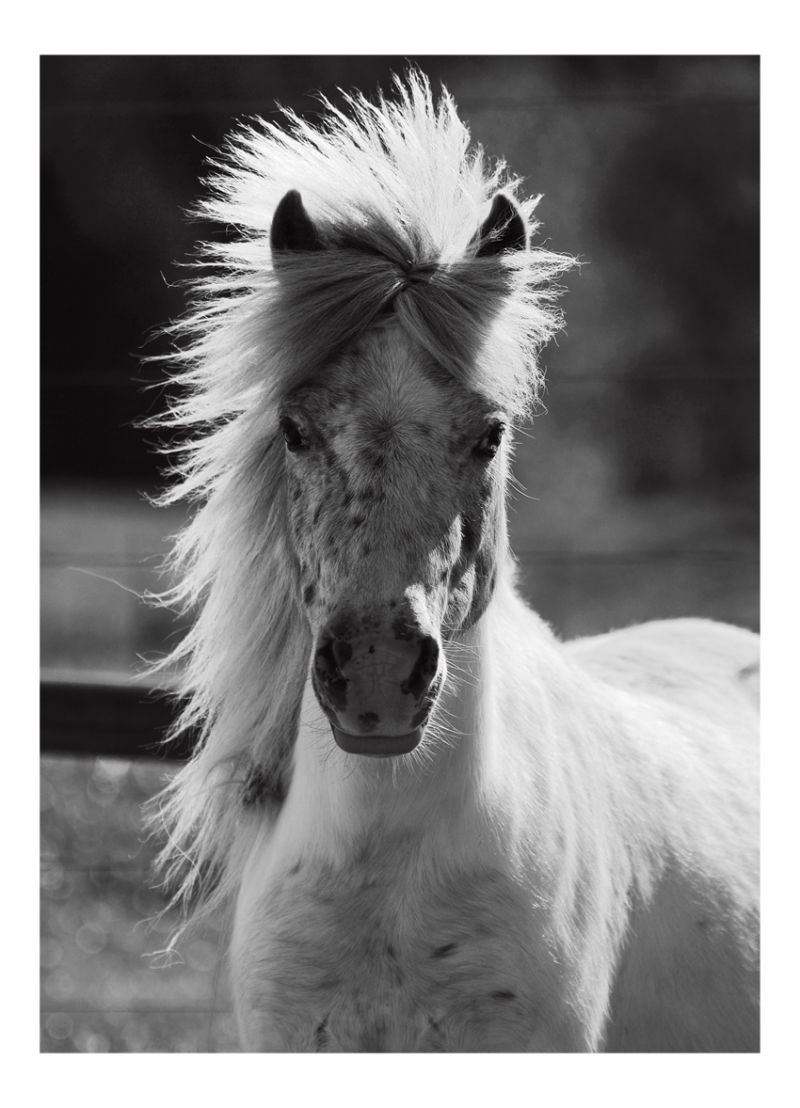 Horse Punk