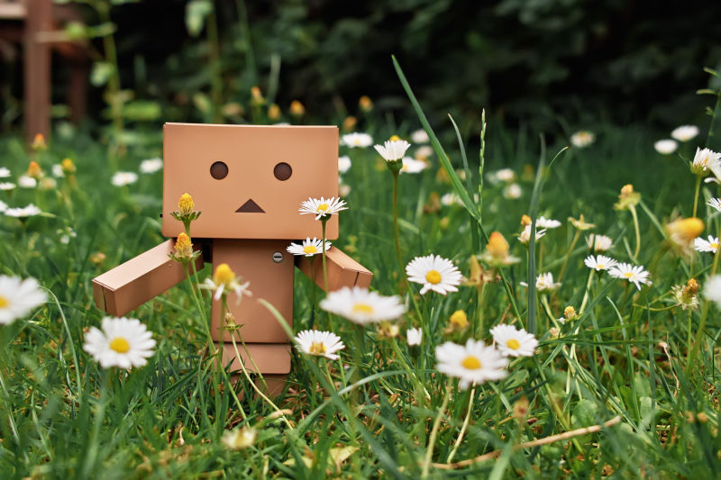 Danbo ventures out