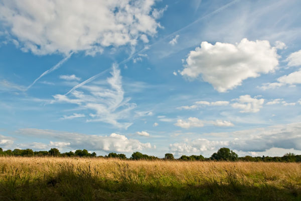 Farthing Downs - Surrey