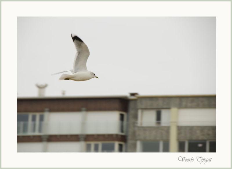 As free as a bird...003
