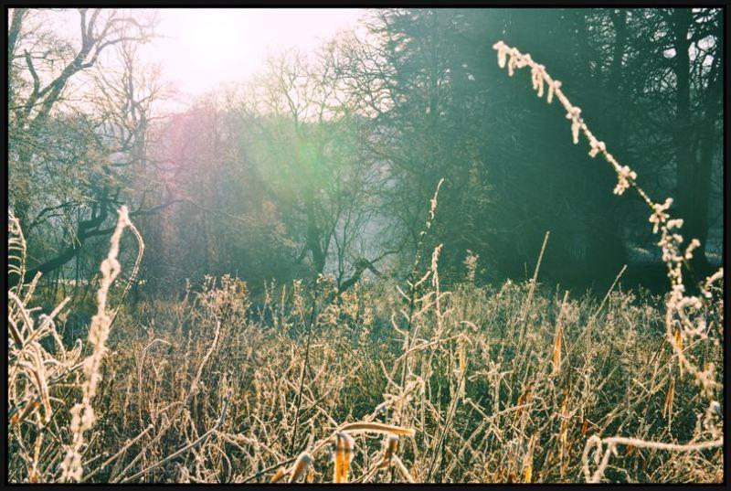 Frosty Walk