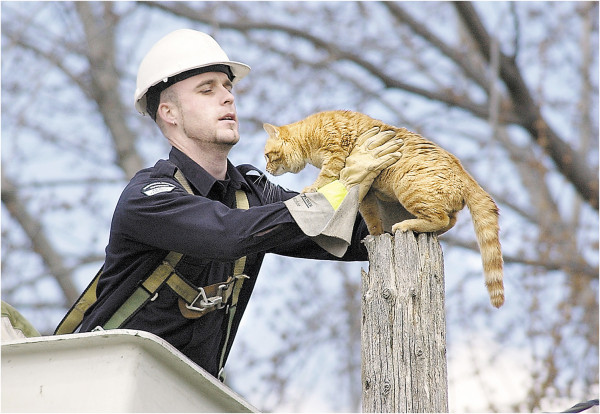 cat rescued from hydro pole