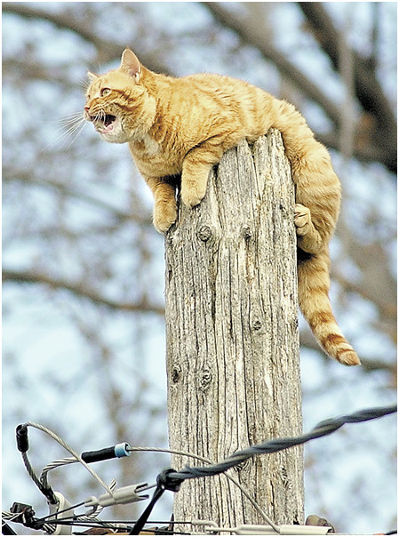 cat spends night on hydro pole