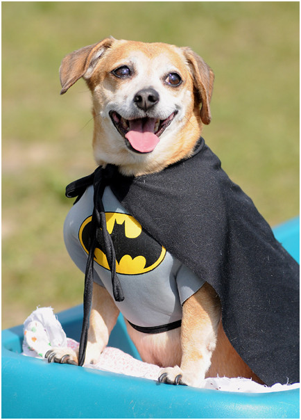 Caped Canine