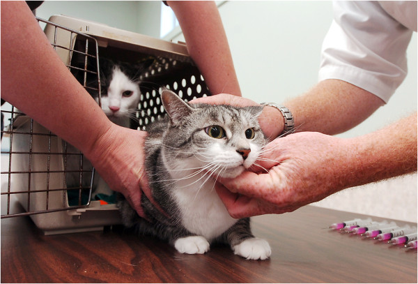 cats rabies clinic