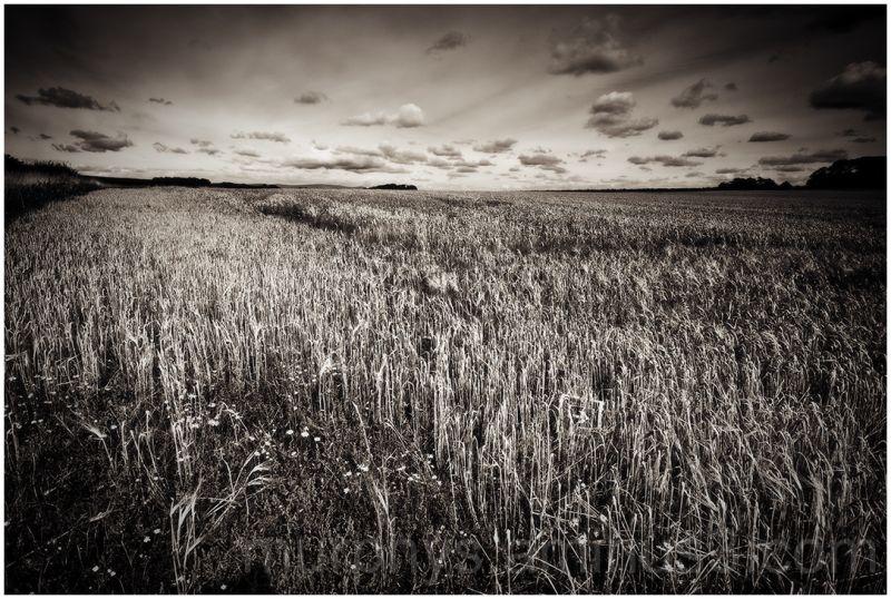 Crop field.