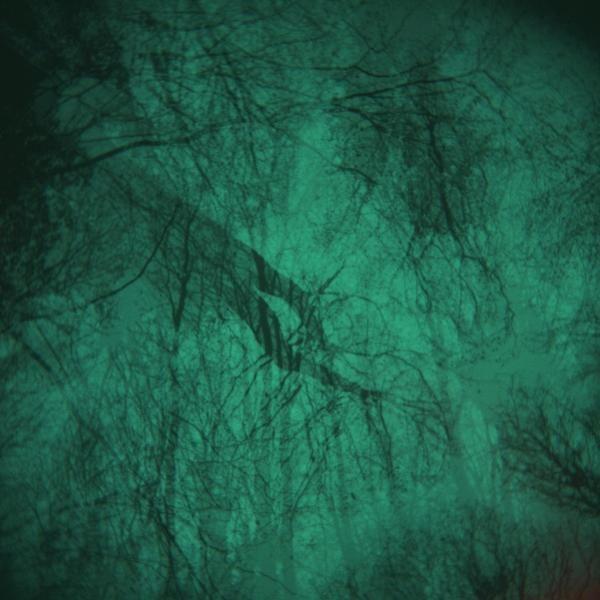 arboricole