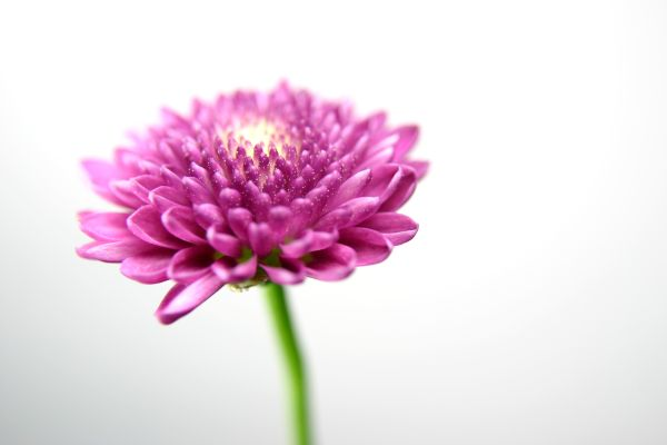 Just Another Flower